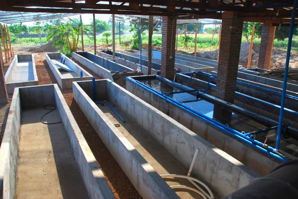 Learn to aquaponic tell a aquaponics fish farming for Fish farming at home